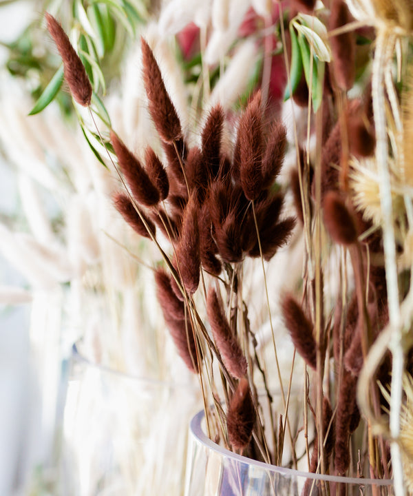 Natural Dried Bunny Tail | Off White, 3 Stems