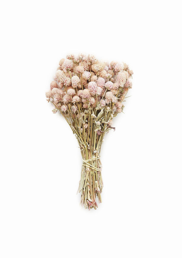 Air Dried Globe Amaranth | Light Pink