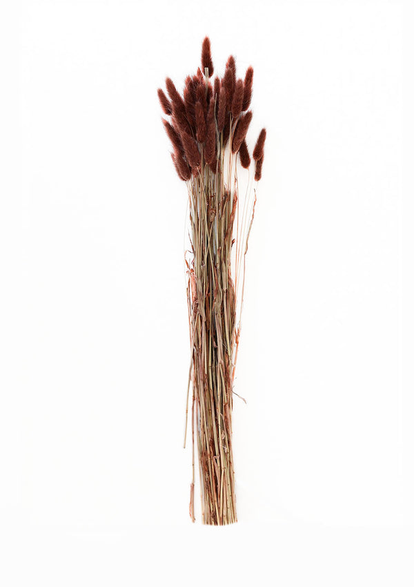 Natural Dried Bunny Tail | Chocolate, 3 Stems