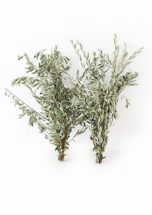 Live Fresh-Cut Olive Leaf