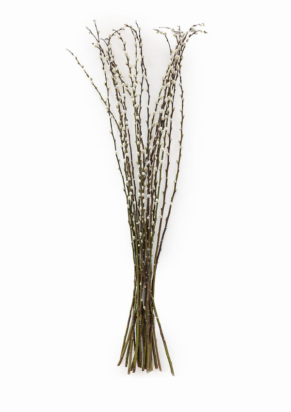 Live Fresh-Cut Pussy Willow Branches
