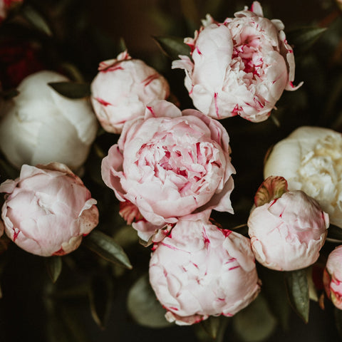 Pay Upfront Peony Subscription PREORDER