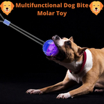Multifunctional Molar Bite Toy