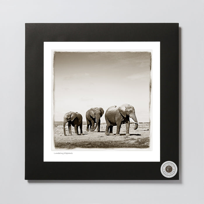 African Fine Art Photo Print Wanyama Elephant Herd Small 330X340MM