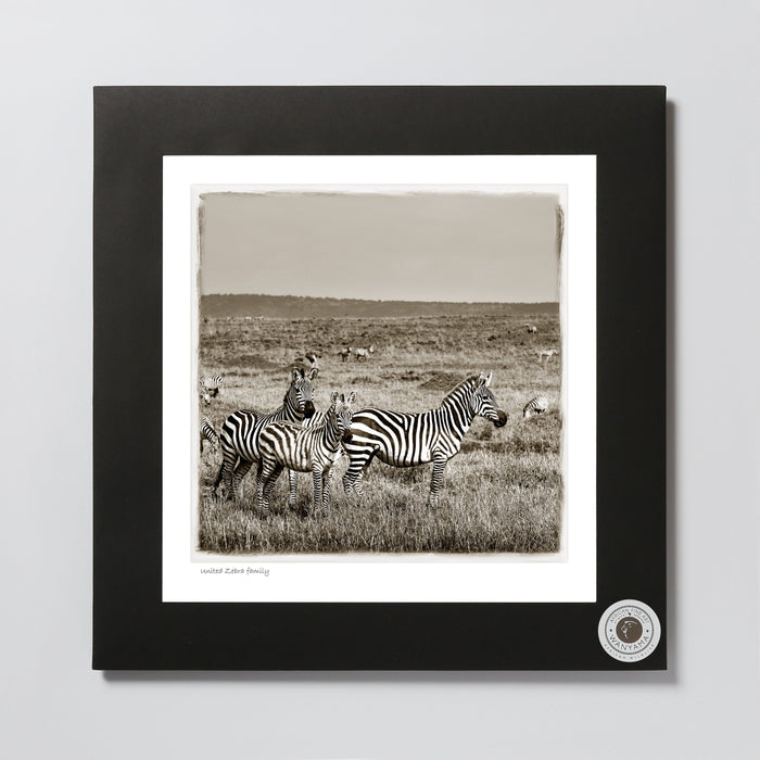 African Fine Art Photo Print Wanyama Zebra Family 330X340MM
