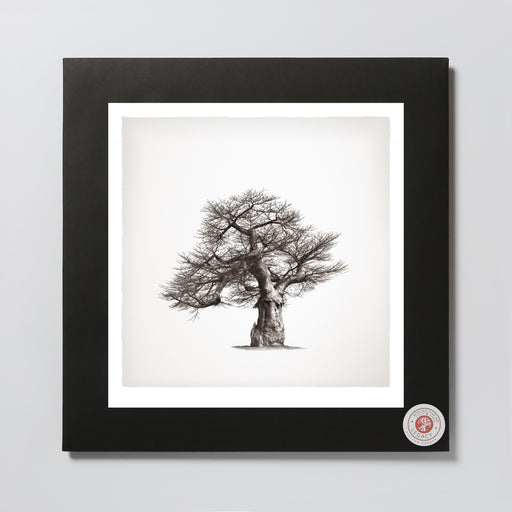 African Fine Art Photo Print Wanyama Baobab Tree 01 330X340MM