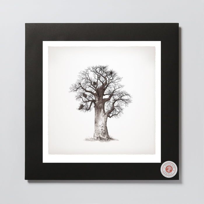 African Fine Art Photo Print Wanyama Baobab Tree 05 330X340MM