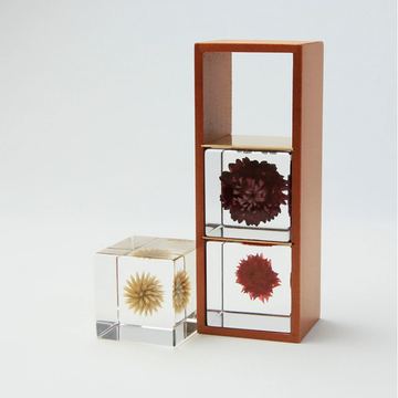 Wooden Sola cube box display
