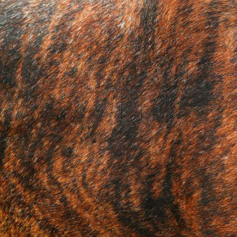 Brindle Animal Fur Patterned HTV