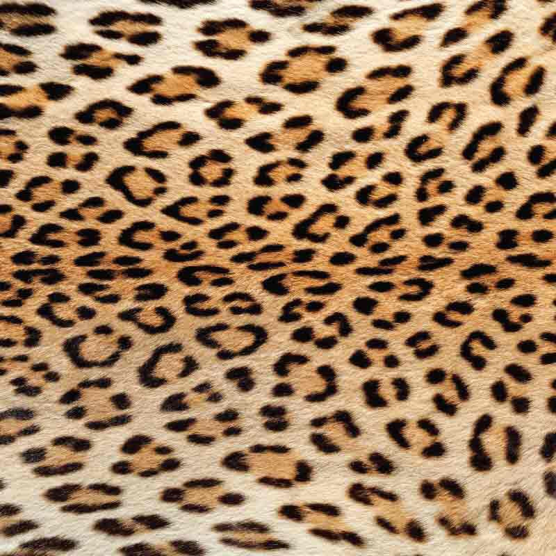 Real Leopard Patterned HTV