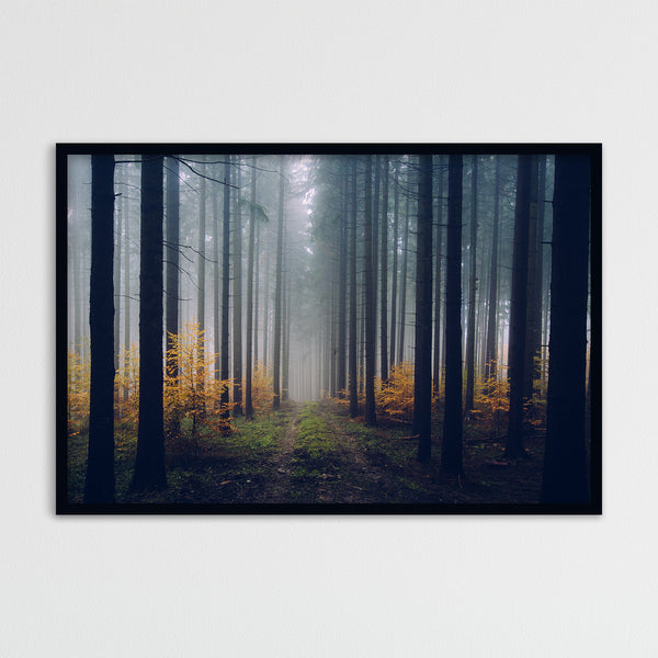 Foggy Autumn Day in the Forest | Photography Print by Northlandscapes