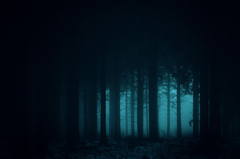 Dark and Mysterious Forest