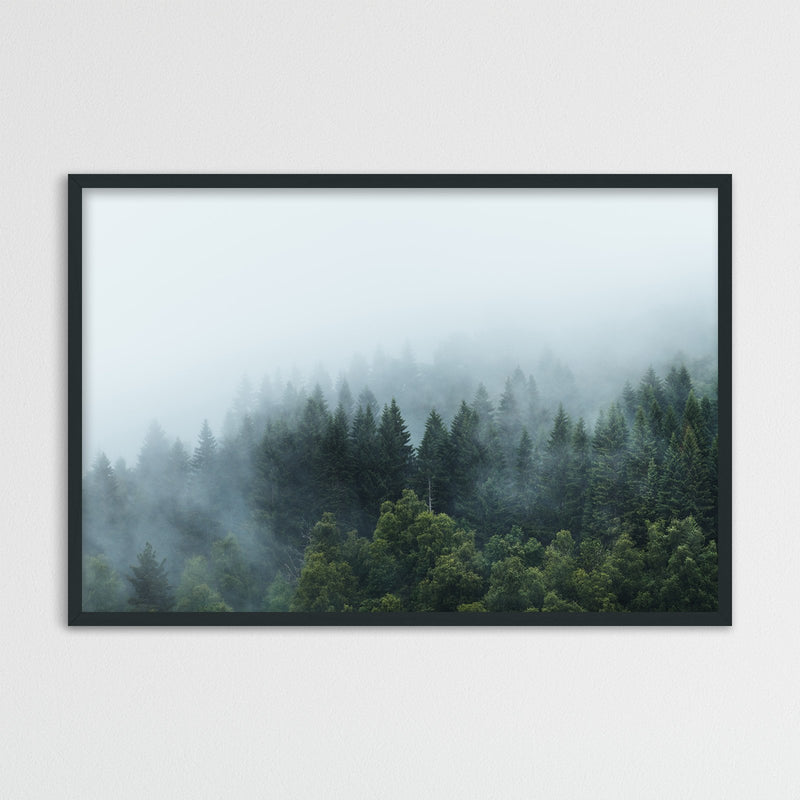 Moody Forest after the Rain | Photography Print by Northlandscapes