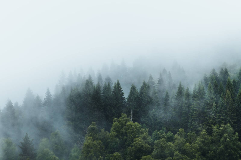 Moody Forest after the Rain in Norway