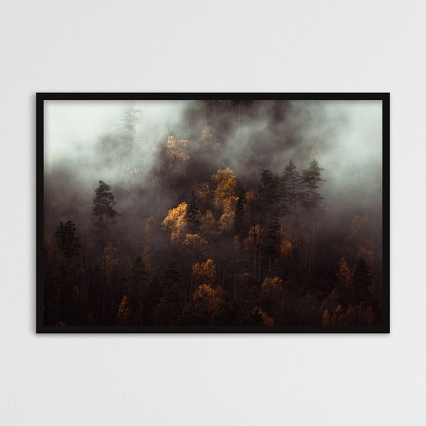 Moody Autumn Forest of Norway | Photography Print by Northlandscapes
