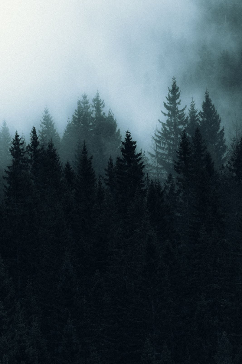 Dark and Foggy Forest of Norway