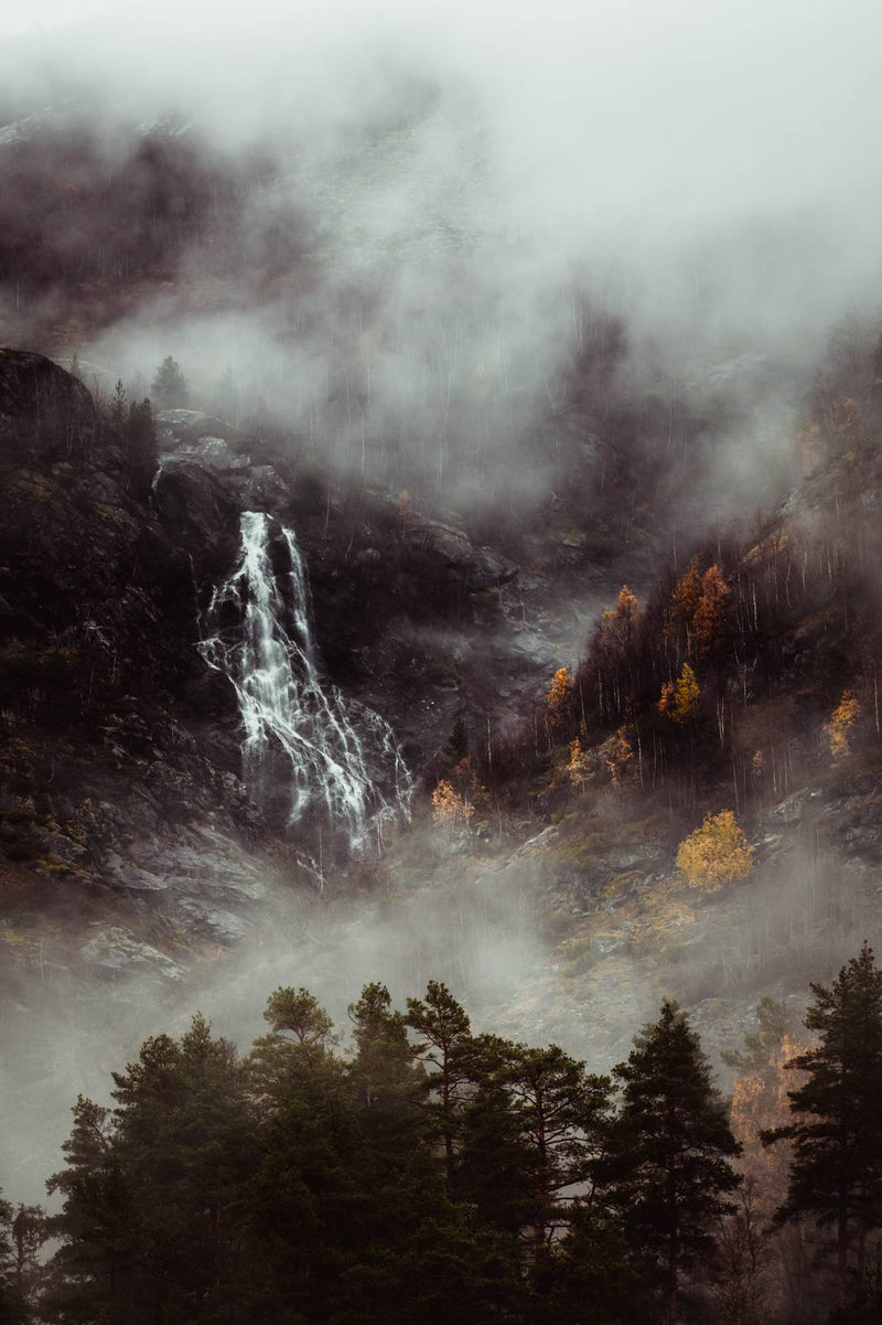 Moody Forest and Waterfall in Norway