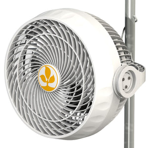 Secret Jardin - Monkey Fan 30w 10""