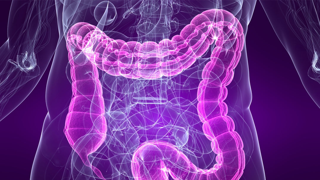 3d purple illustration of digestive tract