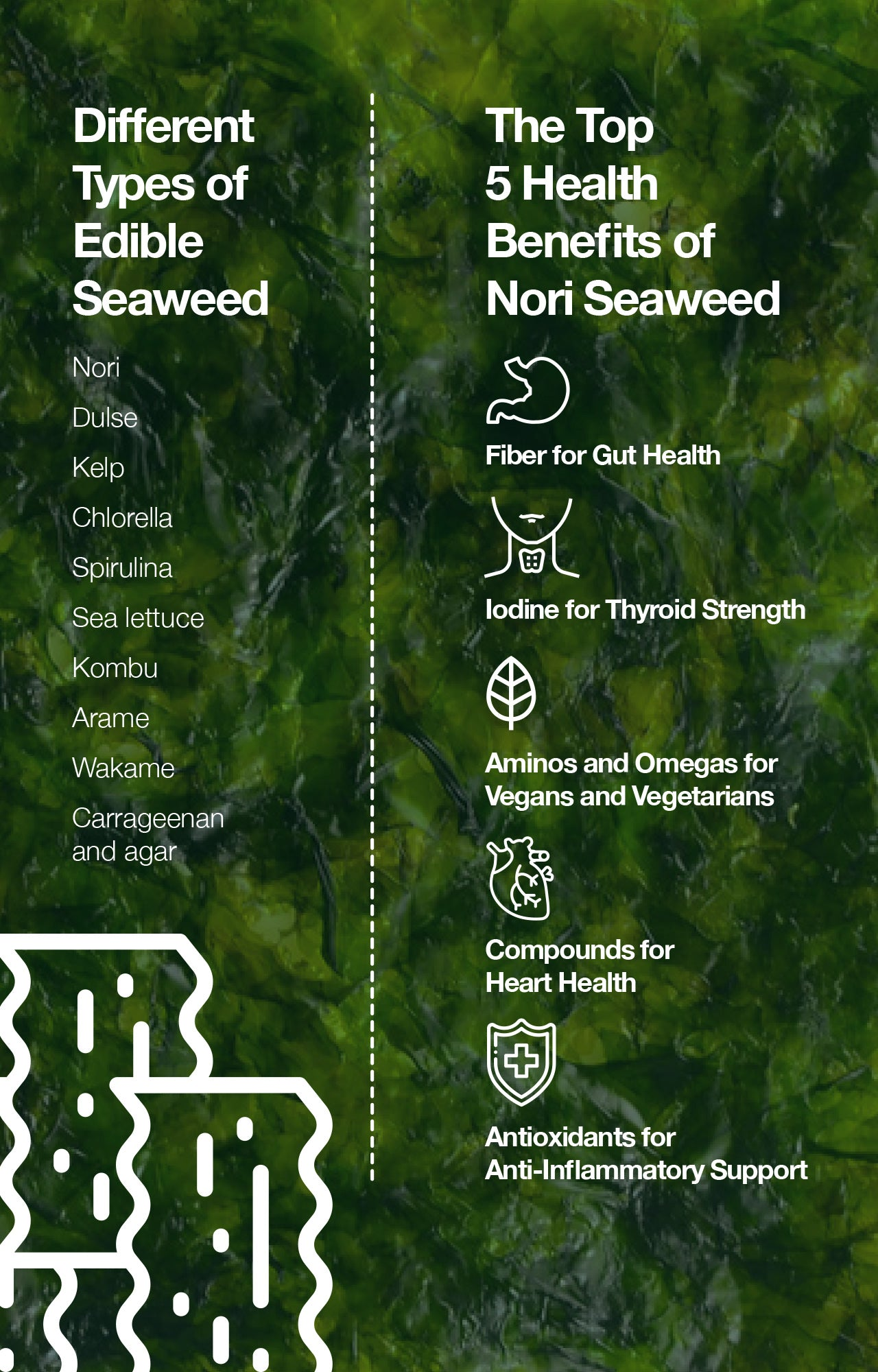 Different Types of Edible Seaweed and Top 5 Health Benefits of Nori Seaweed