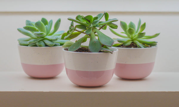 House plants in cute pots for Mother's Day gift