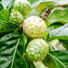 Load image into Gallery viewer, Hawaiian Noni Powder  (Raw- Organic)