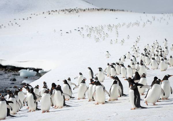 5 Reasons To Go On An Expedition Cruise