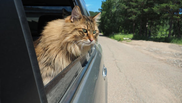 How to plan a successful road trip with your cat