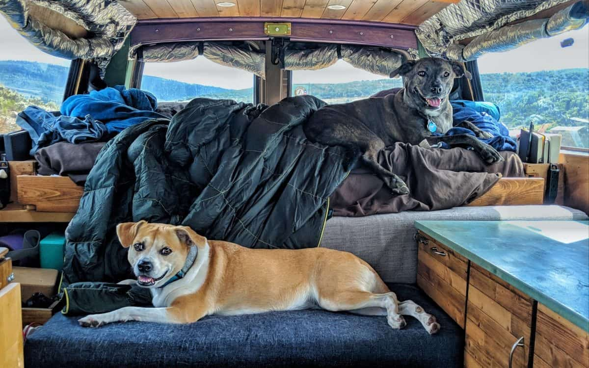 Affordable Vacations to Take with Your Pet