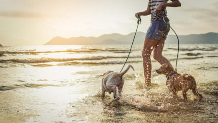 Common Mistakes to Avoid When Traveling with Pets