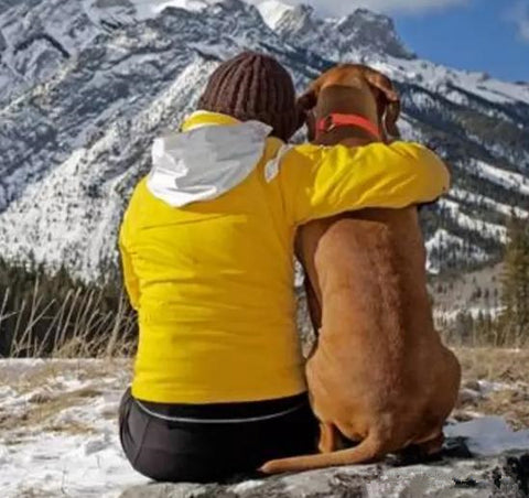 7 tips for  backpacking hiking with your dog