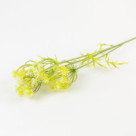 1 stem of parsley flower