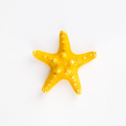 1 starfish - Yellow