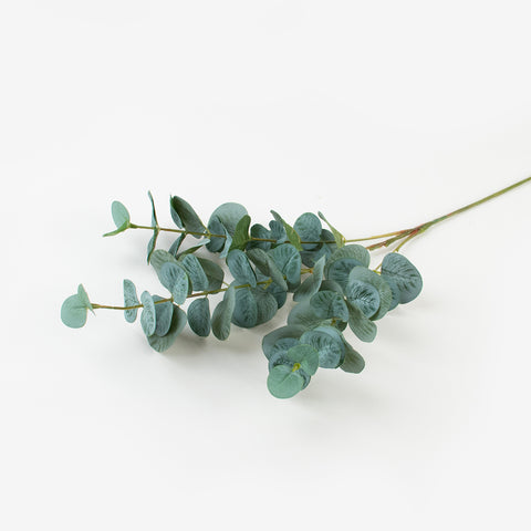 1 stem of Eucalyptus