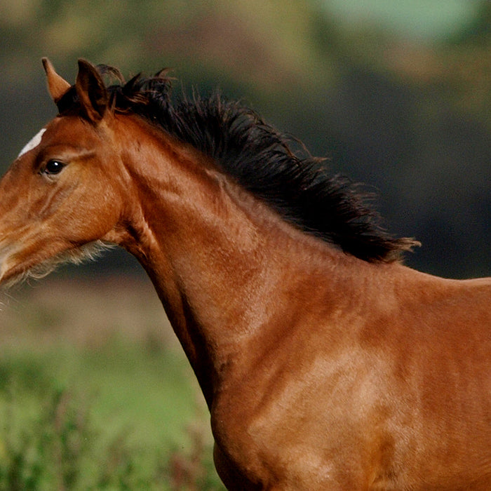 Promoting Equine Muscle Health – Horse Health Tips