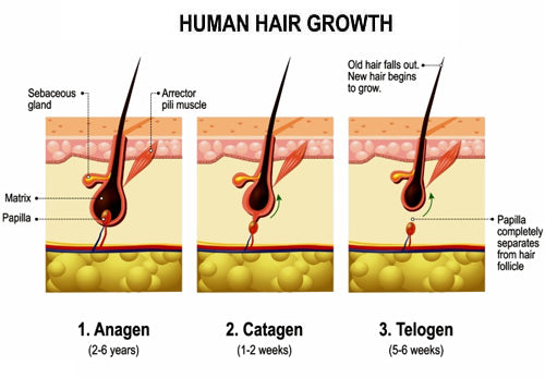 LED Therapy Human Hair Growth
