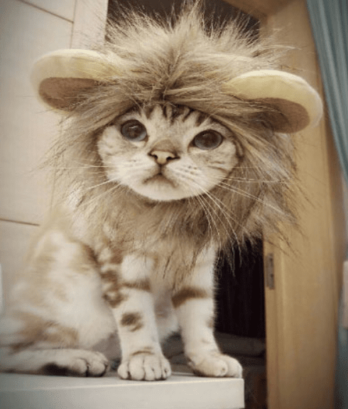b189a8699 Load image into Gallery viewer, Funny Cute Pet Costume Cosplay Lion Mane  Wig Cap Hat ...