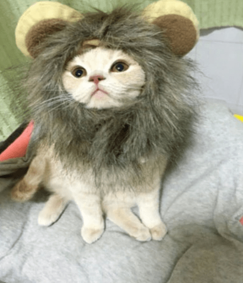 b2ec46d5b ... Load image into Gallery viewer, Funny Cute Pet Costume Cosplay Lion  Mane Wig Cap Hat ...
