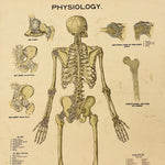 Antique Skeleton Lithograph Poster - Rare 19th Century Medical Chart - Caxton Company - 1894 - 1800s Anatomy Litho - 33 x 23