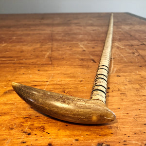 Antique Shark Vertebrae Cane with Horn Handle | 1800s