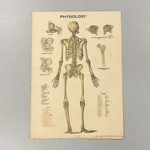 Antique Skeleton Lithograph Poster - Rare 19th Century Medical Chart - Caxton Company - 1894 - 1800s Anatomy Litho - 33 x 23  Great Wall Decor