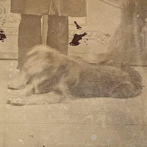 dog in Antique Tintype of Serious Man and Dog - Rare Pet Photography - Unusual Late 1800s Photograph - Gangster? - Underground Image