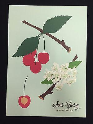 Snow and Graham Art Print - Sour Cherry - 7.5