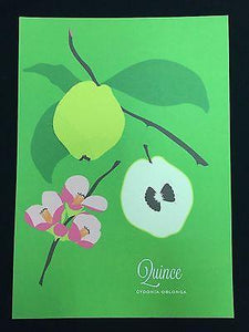 "Snow and Graham Art Print - Quince - 7.5"" x 10.5"" - Petals and Postings"
