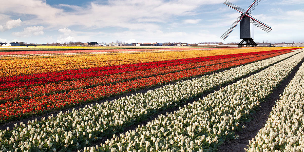 Netherlands windmill and clear air