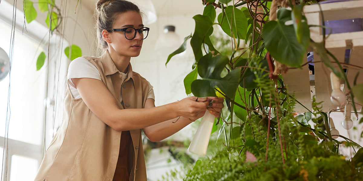 What is the best way to purchase house plants?