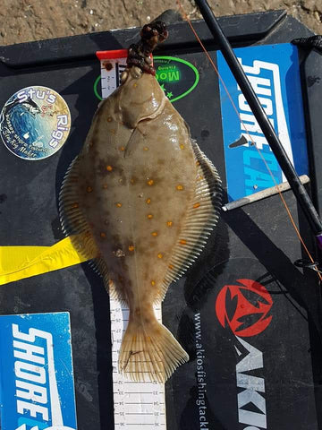 Plaice caught on lungworm and moonglow neon attractor