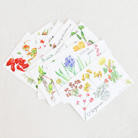 CA Native Plant Postcards - Set of 12