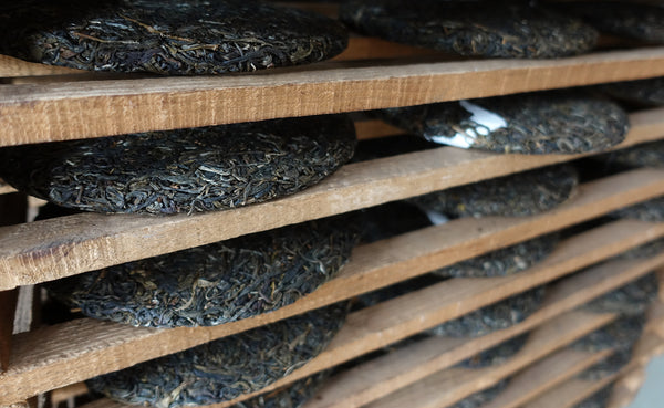 Mansa Tea | how raw pu'er is processed into tea cakes, aged tea, caffeine in pu'er, caffeine in raw pu'er vs. ripe pu'er
