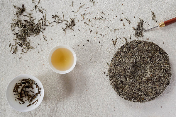 White Tea Caffeine Content is Higher Than You Think